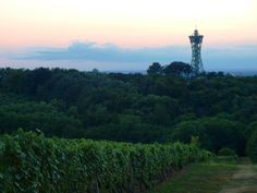 Evening view of the vineyards and the winetower Vinarium Lendava, Slovenia photo: andreabedo
