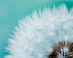 photographie teal bleu grand art de fleurs de par mylittlepixels
