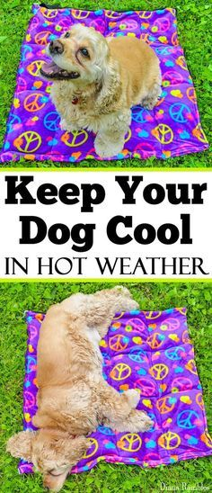 Keep your Dog Cool in Hot Weather with this DIY Dog Cooling Pad Sewing Tutorial - Need to keep your dog cooled off in hot weather? Here is a DIY Dog Cooling Mat Tutorial that will keep your pooch cool while he's outside with the family. It's great pet bed http://www.poochportal.com/