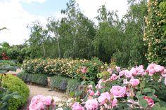 Alowyn Gardens www.yarravalleymagazine.com.au