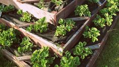 A lot of people are making use of this extra time by starting some great home projects. If you're interested in some very approachable ideas for your home, this article about building raised beds might be just the thing. Raised Garden Bed Soil, Soil For Raised Beds, Garden Soil, Gardening, Awesome Woodworking Ideas, Learn Woodworking, Muffin Coeur Nutella, Carpentry Basics, Home Projects