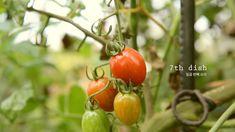 리틀포레스트 여름편 홀토마토 : Little Forest: summer&autumn, spaghetti with tomato : 꿀키