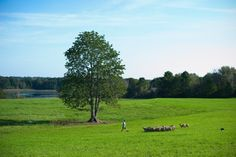 Maine Farm Land Trust
