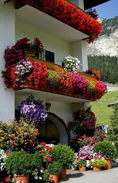 Container gardening at its best Beautiful Landscapes, Beautiful Gardens, Beautiful Flowers, Beautiful Places, Window Box Flowers, Balcony Flowers, Balcony Garden, Garden Pots, Lush Garden