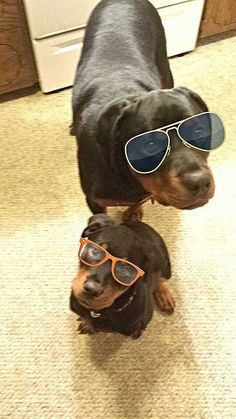 Rottie Hipsters~