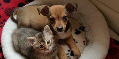 Chip y Adele: dos cachorros abandonados que se volvieron inseparables | Notas | La Bioguía