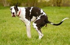 La cacca di cane ti raggiunge a casa, con una multa!