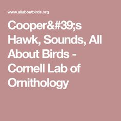 Cooper's Hawk, Sounds, All About Birds - Cornell Lab of Ornithology