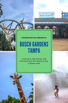 Looking for an escape from your usually Florida vacation. Tired of visiting Universal Studios Orlando and Walt Disney World? Looking for amazing thrill rides? Check out Busch Gardens Tampa. Filled with amazing animals, thrilling rides and epic eats. Busch Gardens is the perfect location for a family get together.