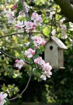 Birdhouse hanging in a flowering tree