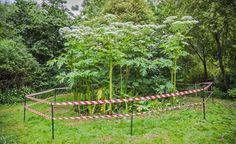 Die 10 gefährlichsten Giftpflanzen im Garten