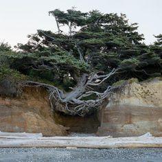 Washington Beaches, Washington State, New York Times, Ocean Cliff, Beach Landscape, Fauna, Evergreen, Natural Beauty, National Parks