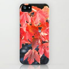 Red Shades of Fall iPhone & iPod Case by BACK to BASICS - $35.00