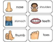 Parts of My Body Printable Flashcards. Preschool Health.