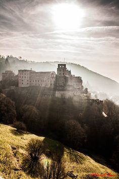 Heidelberg Castle, actually I see it nearly every day, but it's still beautiful!