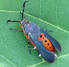 Squash vine borer - good info to keep in mind for next year.  Too late for my squash this season :(