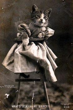 Vintage LOLcat