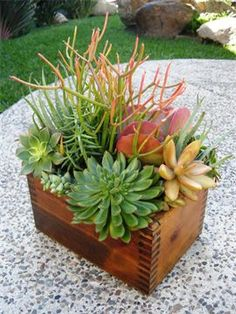 I love this Handmade Shoeshine box that now grows beautiful succulent arrangements. This is my kind of stuff! Flower Pots, Flowers, Succulent Terrarium, Succulent Landscaping, Succulents, Plants, Succulent Landscape Design, Wooden Succulent Planter, Succulents In Containers