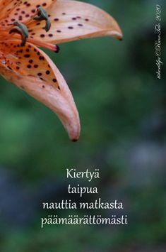 voimakortti Kiertyä taipua nauttia matkasta Fruit, Animals, Instagram, Cards, Animales, Animaux, Animal, Maps, Animais