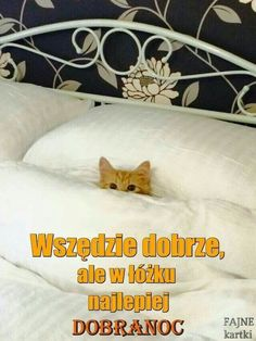 Good Night Friends Images, Weekend Humor, Good Night Sweet Dreams, Cute Cats And Dogs, Fantasy Artwork, Reaction Pictures, Good Morning, Cute Pictures, Dog Cat