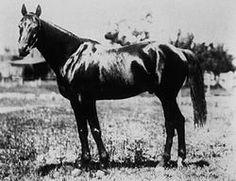 Chant- 1894 Kentucky Derby Winner