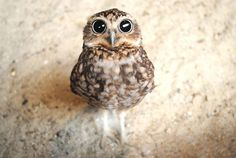 Ohhhh look at the widdle owl! How big your eyes are!