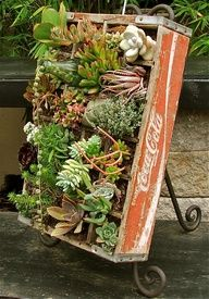 "Wooden soda crate transformed into an ""artful"" container full of succulents."