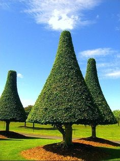green emissions - topiary trees in australia
