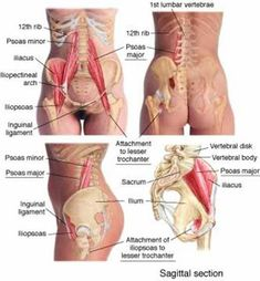 Lower back pain and hip pain sources.