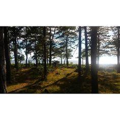 【sara_boy】さんのInstagramをピンしています。 《Summer house  サマーハウス  #別荘 #サマーハウス #スウェーデン #森 #summerhouse #sweden》