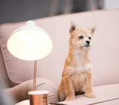 Our Charlotte sofa with Chippy the puppy  https://www.plush.com.au/sofas/charlotte-sofa