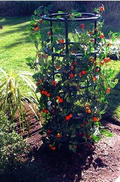 Superbe Grow Cage * Details Can Be Found By Clicking On The Image.