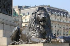 One of the Bronze Lions in Trafalgar Square, London, England. They have seen so many historical moments.
