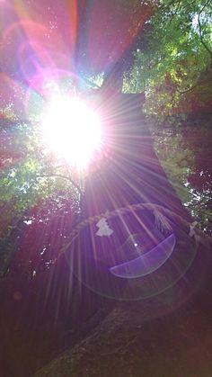 川越氷川神社へ✨✨✨感謝を込めて 。。。 | 川越の直傳靈氣療法士*孔雀と太陽の虹色の旅
