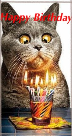 Happy birthday more. happy birthday more cat birthday wishes, happy birthday funny Funny Happy Birthday Pictures, Happy Birthday Funny, Happy Birthday Greetings, Funny Birthday Cards, Humor Birthday, Birthday Quotes, Birthday Humorous, Cat Birthday Wishes, Happy Birthday Friend