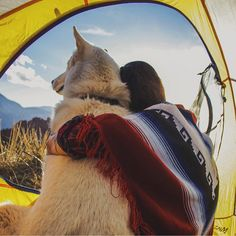 """""""Your dog is sitting at home wondering when you'll go camping again. So, when are you? #campingwithdogs @thecompasswolf"""""""