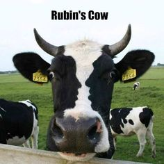 Rubin's Cow! Visit: http://www.all-about-psychology.com/optical-illusions.html to learn all about the psychology of optical illusions and see some brilliant optical illusion examples. #OpticalIllusions #VisualIllusions #psychology