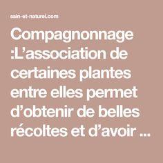Compagnonnage :L'association de certaines plantes entre elles permet d'obtenir de belles récoltes et d'avoir un beau jardin potager en aidant le jardinier