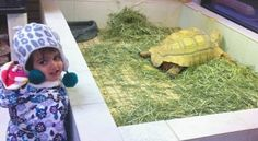 Little Helen loves to visit The Animal Store. Here she is with our sulcata tortoise, Spur.