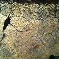 Dinosaur skin from the ROM exhibit