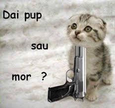 Weird animals with guns! Funny Animal Photos, Funny Cat Pictures, Funny Photos, Animals And Pets, Funny Animals, Cute Animals, Shocked Cat, Funny Images Gallery, Gifs