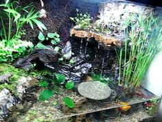 10 gallon tank with fire-belly toads, neon tetras, platies, ghost shrimp, and lots of plants.  Uses an external 5Gal sump.