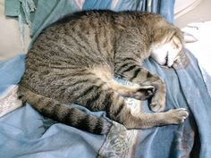 今日の猫(2014/9/2) | Flickr - Photo Sharing!