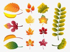 Fall Leaves Vector free