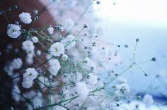 脇役だけじゃもったいない。「カスミソウ」を主役にした花の生け方