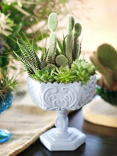 Cactus and Succulents in Milk Glass