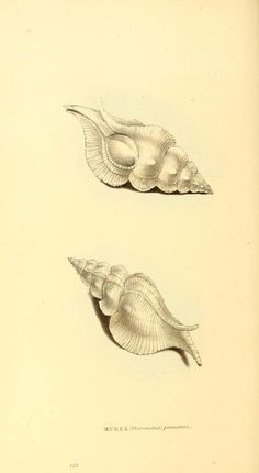 v. 3 - Zoological illustrations, or, Original figures and descriptions of new, rare, or interesting animals, selected chiefly from the class...