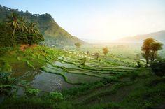 Amazing landscape of rice field of Bali. Impresionante paisaje de campos de arroz de Bali