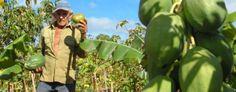 http://www.infolatam.com/wp-content/uploads/2011/10/cuba-campesino-holguin-02-e1319059592428-655x256.jpg
