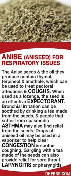 The Anise seeds  the oil contain thymol, terpineol  anethole, which can be used to treat pectoral affections  coughs.. #dh... http://dherbs.com/pinterest/dherbs-ht-aniseed.jpg